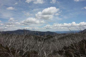 Tysiące hektarów odradzających się lasów eukaliptusowych. Srebrzące się kikuty obumarłych drzew stanowiły niezwykły, wręcz bajkowy wygląd.