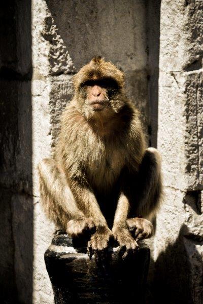 Mieszkaniec Gibraltaru
