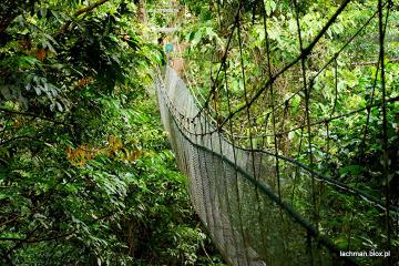 Przeprawa przez dżunglę na Borneo