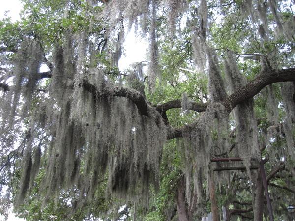 """Gorąco, goręcej... Savannah w stanie Georgia to miasto niezwykle urokliwe i zupełnie inne od znanych mi miast amerykańskich, głównie przez kolonialną zabudowę oraz charakterystyczne """"brodate"""" drzewa."""