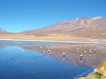 Laguny i flamingi