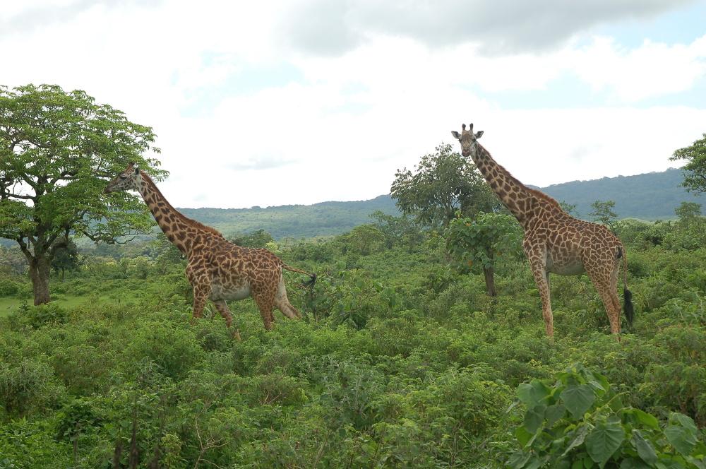 Fotorelacja z Tanzanii