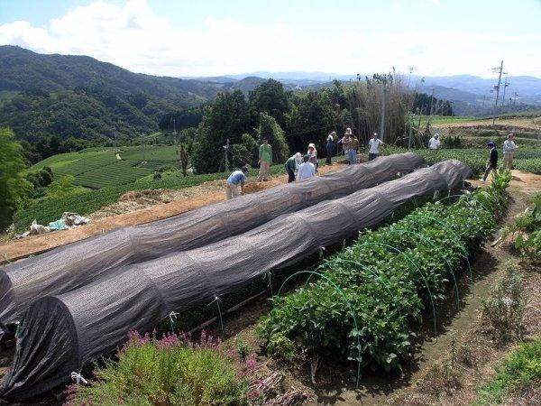 Praca na polu herbacianym