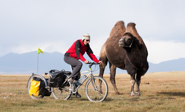 Trawers wielbłąda