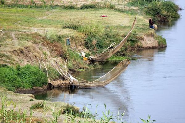 Połów ryb niedaleko Garuoa. W Afryce zachodniej nie ma firm,które płacą rybakom za łowienie wybranych gatunków. Wszystkie ryby są wyławiane pod określone zamówienie. Większość połowów odbywa się w okolicach zachodniego i południowo-zachodniego Kamerunu, ponieważ koszty dalszych wypraw  (np. po Heterochromis multidens) są bardzo wysokie i nie zwróciłyby się rybakom.
