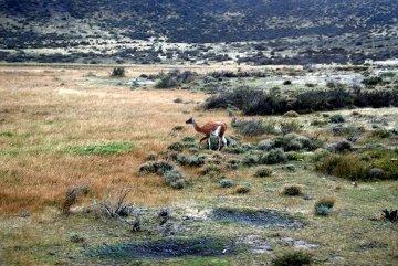 W drodze do Torres del Paine i stałe widoki za oknem