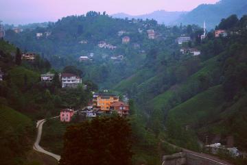 Plantacje herbaty pośród wilgotnych wyżyn Karadeniz.