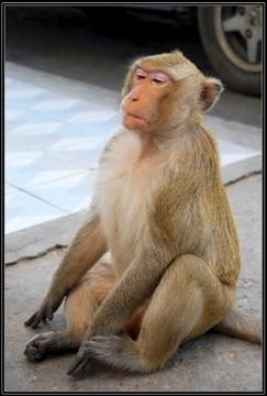 Lop Buri  - Miasto Małp