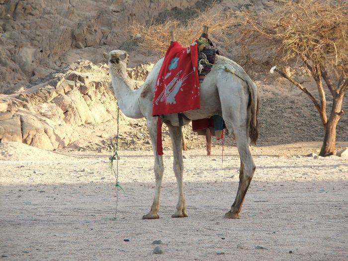 Z wizytą w Kraju Faraonów