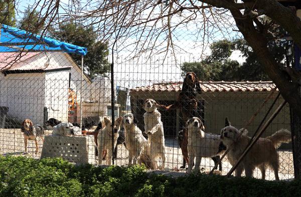 Skiathos Dog Shelter