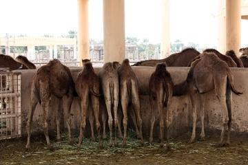 A kiedy już zwiedziliśmy wszystkie standardowe miejsca możemyrównież wybrać się do zoo, gdzie zwierzęta są bardzo gościnne :)