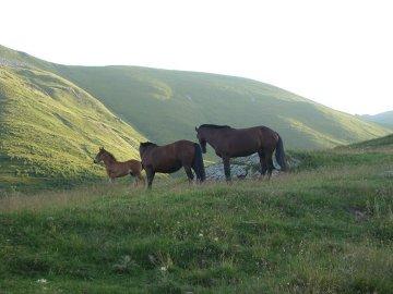 Sielskie widoki z drodze na Kazbek