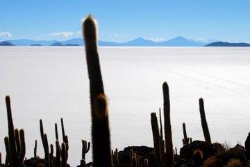 Wyspa Kaktusowa Pustyni Solnej