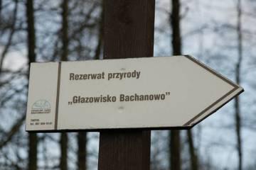 W rezerwacie Bachanowo chroni się głazy narzutowe, które są nieodłącznym elementem krajobrazu polodowcowego