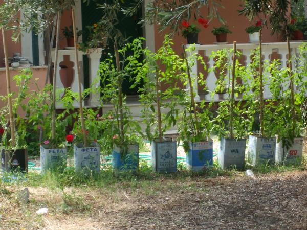 Rośliny w hodowane puszkach po serze fetach