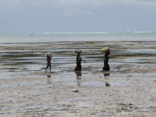 Mieszkańcy Zanzibaru to w 99 procentach muzułmanie, zaś mieszkańcy stałego lądu to głównie chrześcijanie.