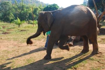 Chiang Mai - Trekking