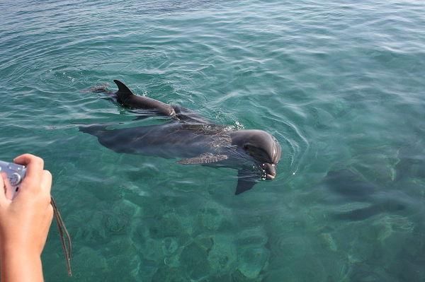 Ejlat - delfiny